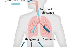 "<div class=""bildtitel"">Abb. 1: Transportmechanismen inhalierter Partikel in den Atemwegen</div>"